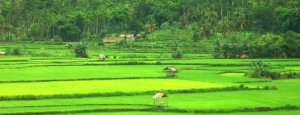 Farmland at Dodu, Bima city.. Foto:By Multazam Abdullah