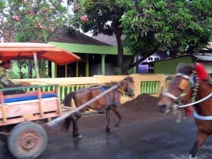 Benhur..Traditional transportation Located:Sape,East Bima...