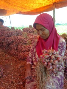 Wanita bima *podeng*//ikat bawang....Bimanese girl at onion farmland